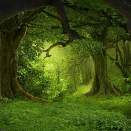 freetoedit green tree trees leaves
