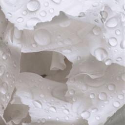 pcwhite white