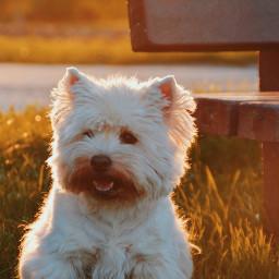 dog dogs pet animal cute freetoedit