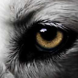 freetoedit fantasyart fantasy doubleexposure wolf