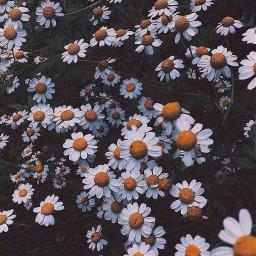 flores flowers blanco tumblr fondosdepantalla