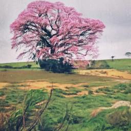 freetoedit nature naturephotography paintbrush picsart