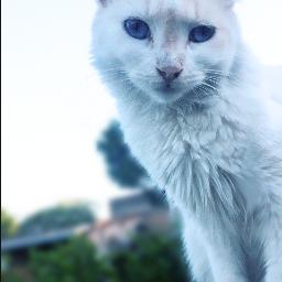 photography cat nature petsandanimals happyweekend