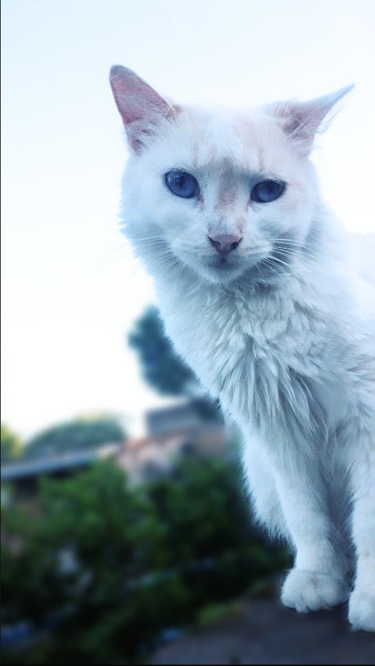 #photography #cat#nature #petsandanimals #happyweekend #popart