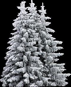 елка_белая freetoedit елка