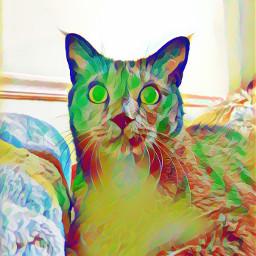 russianblue russianbluecat gray graycat rainbowcat