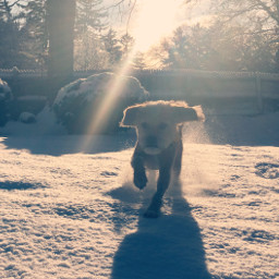 freetoedit dog snowflakes snowday dogrunning