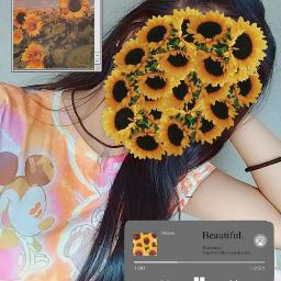 freetoedit sunflower sunflowers🌻💛🌻 aesthetic internet