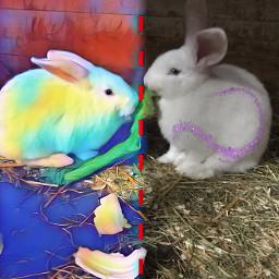 challenge rabbits freetoedit srcpurplesparkles purplesparkles