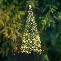 freetoedit christmas christmastree winterbreak