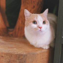 catsofpicsart cats freetoedit