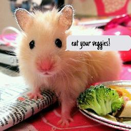 hamster cute vegetables text freetoedit