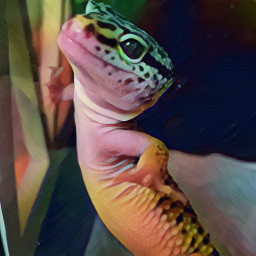 leopardgecko gecko lizard pet animal