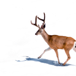 deer animal animals nature freetoedit