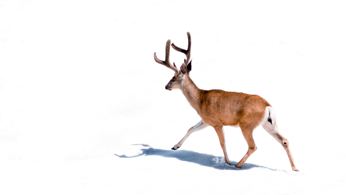 Discover  your inner artist!	 Unsplash (Public Domain) #deer #animal #animals #nature #freetoedit