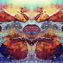 leafprint nature colors patternsinnature ice