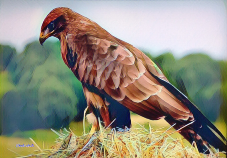 #nature #animals #bird #artistic #photography