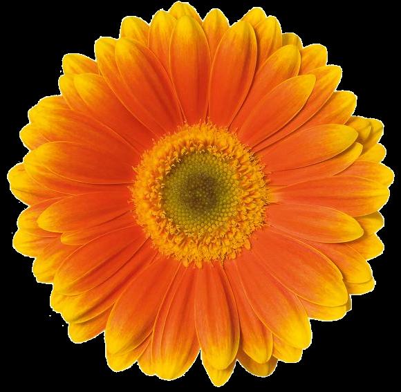 #lucymy #flowers #flowerslucymy