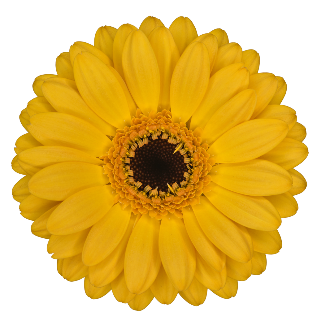 #lucymy  #flowers #flowerslucymy #wow