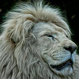 lion e-go nature petsandanimals e