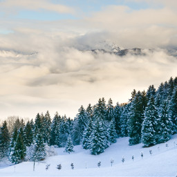 nature snow winter background backgrounds freetoedit