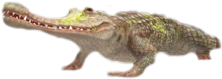 wildcraft вилдкрафт вилд wild крокодил freetoedit