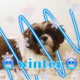mydog winter blue cold cute freetoedit