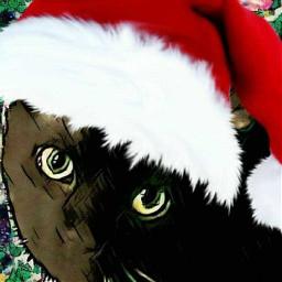 freetoedit cat kitty kittycat christmas ecfestivepets