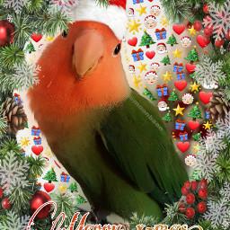 freetoedit christmas parrot santaclaus northpole ecfestivepets festivepets