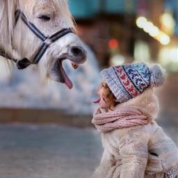 freetoedit thehorselove horselove beautifulbirthmarks animaleye srcfestivelights