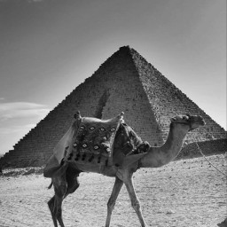 freetoedit photography blackandwhite pyramid egypt