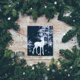 freetoedit winter inverno renna natale holidays