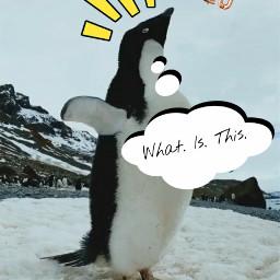 freetoedit penguin newyear newyear2020 srcnewyear2020