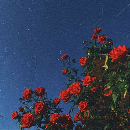 freetoedit aesthetic followme aesthetictumblr tumblr