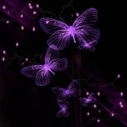 freetoedit transparent butterflys purplebutterflys brightlights
