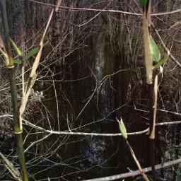 landscape water symmetry woods freetoedit
