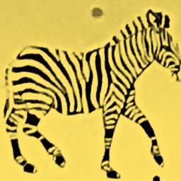 freetoedit yellow hueeffect colorized zebra
