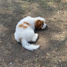 parklife playtime dog puppy puppies