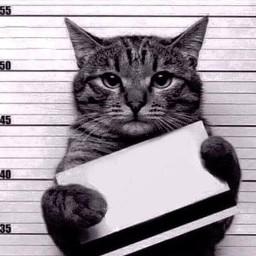 blamethecat cat trouble crime punishment