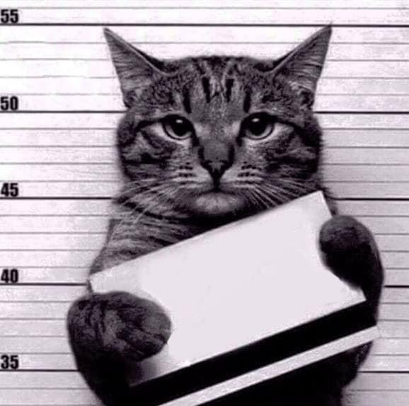 #blamethecat #cat #trouble #crime #punishment #charges #cops #arrested #arrest #charged #guilty #feline #fillintheblanks