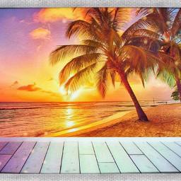 palmtrees beach sunshine averiegrace freetoedit