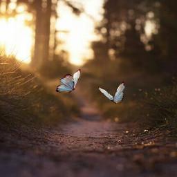 background butterfly freetoedit