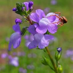 freetoedit macro spider wildflower flower