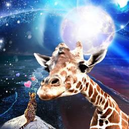 freetoedit giraffe cat petsandanimals landscape