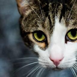 cat cats pet animal animals freetoedit