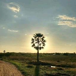 nature palmtree nordeste campo