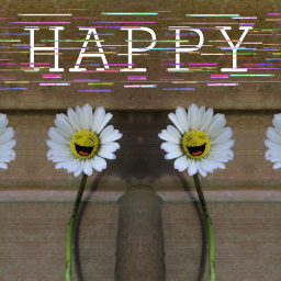 daisy flower mirroreffect happiness freetoedit