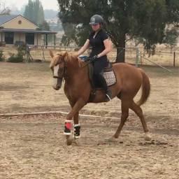 freetoedit horse sick trainer mybanjo