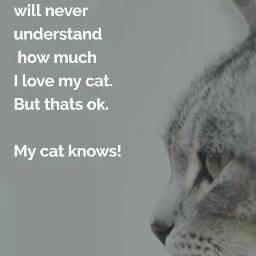 cats furbaby love motivation motivational