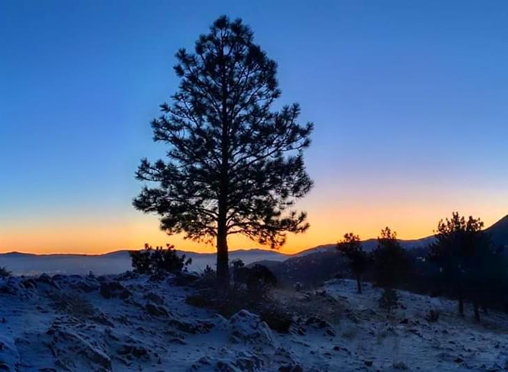 #freetoedit #rogerlynn #nature #trees #mountainview #sunrise